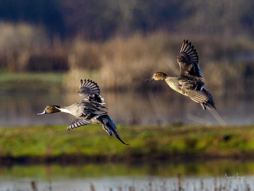 Quelques oiseaux 50821181588_0f4bb512fd_b