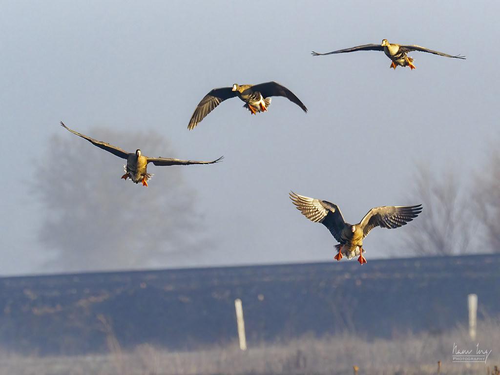 Quelques oiseaux 50821181648_c215c4b465_b