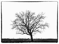 Minimal tree by Keraman B&W