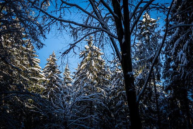 Schneebedeckter Wald