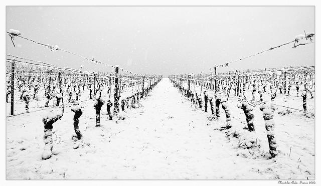 Vin blanc...