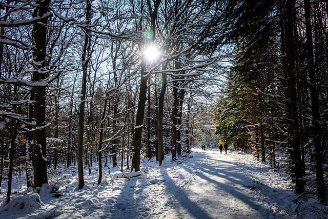 Schnee, Sonne & Wald