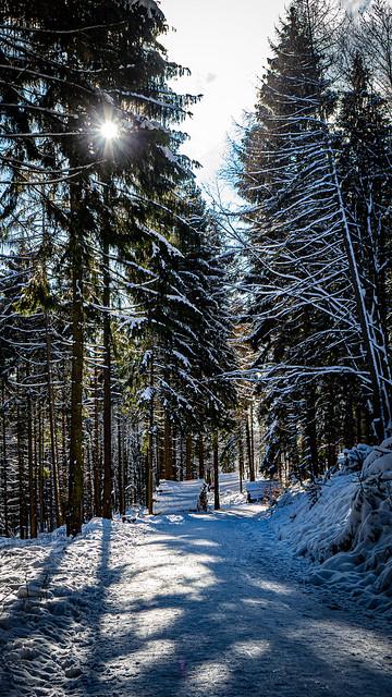 Winterliche Stimmung im Wald