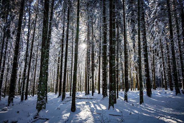 Bäume soweit das Auge reicht