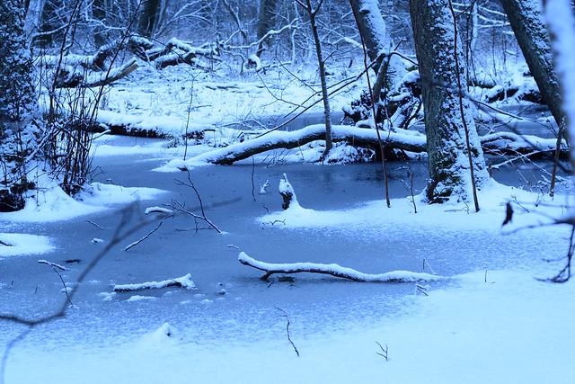 A frozen swamp