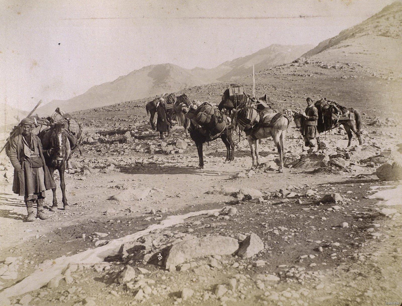 Караван нагруженных лошадей в пути