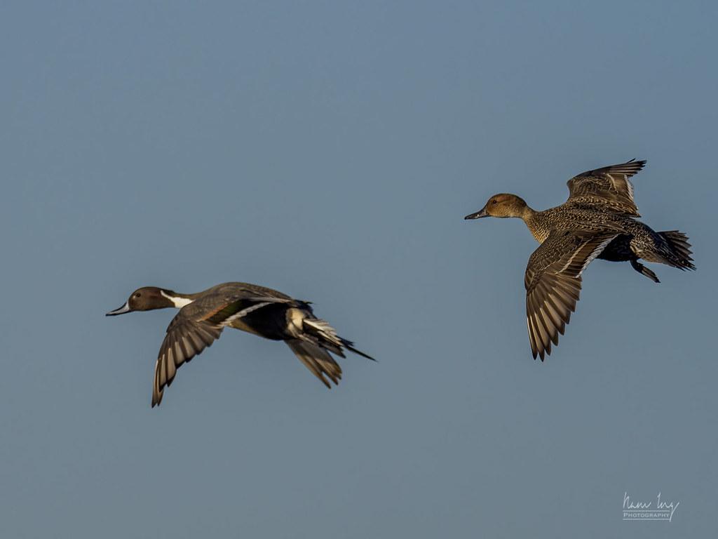 Quelques oiseaux 50821928616_3f88b86b5d_b