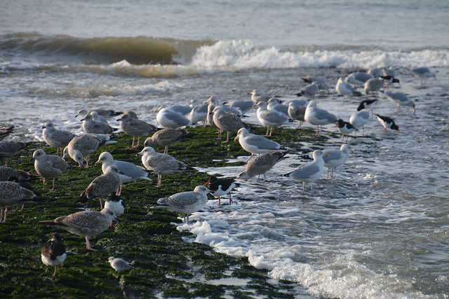 pier met zeevogels