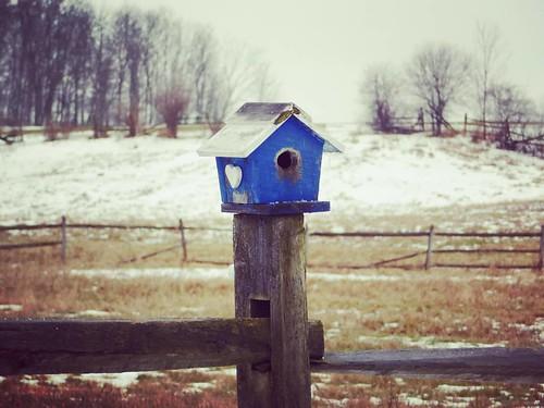 Bird house #birdhouse #KnoxFarm #eastaurora #wny #winter