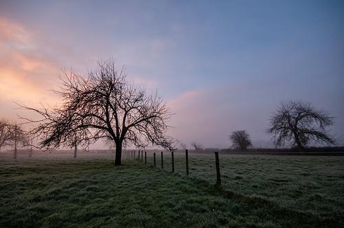 kenn somerset england uk landscape orchard northsomerset sunrise fence grass nikond300 trees appletrees winter