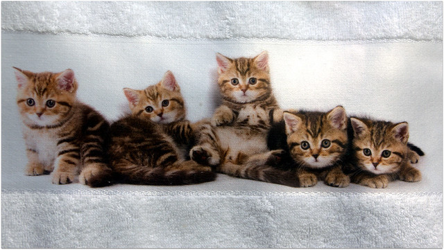 für alle Katzenliebhaber