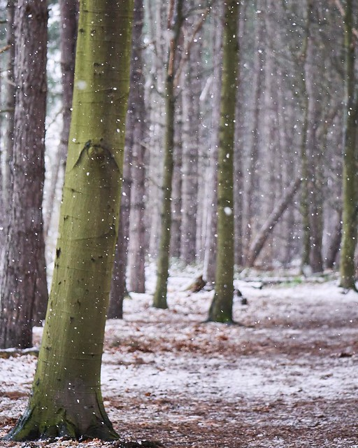 Snowy woods ❄️🌲 last one of the snow last week! I don't think we'll get it here anymore... #landscapes #snow #snowing #ice #wood #forest #britishlandscape #britain #uk #uklandscapes #nature #wildlife #weather #naturettl #manualshot