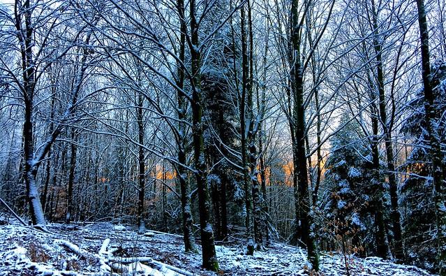 Winterwald                          in Explore 2021