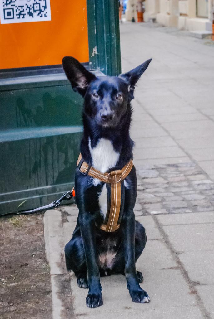 Humans best friend :) Симпатичный пёсик) Как солдатик