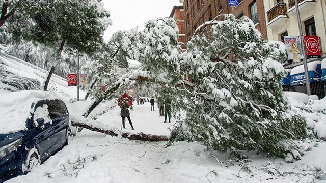 Daños por nevada en Madrid
