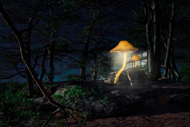 Glowing Mushroom`s Holiday • Leuchtpilze im Urlaub