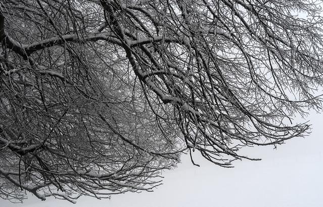 Snowy branches / Äste mit Schnee