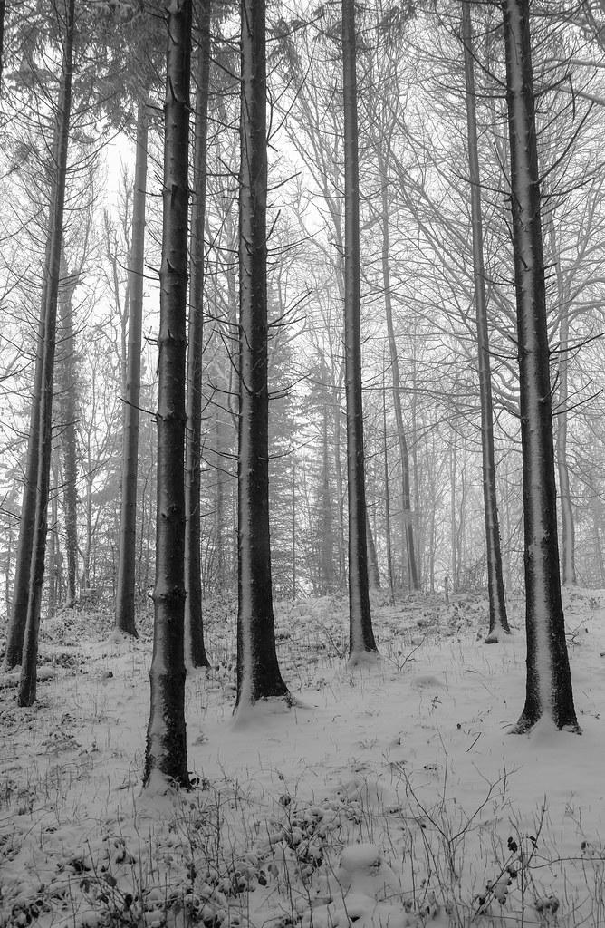 tall trees lll (explore)