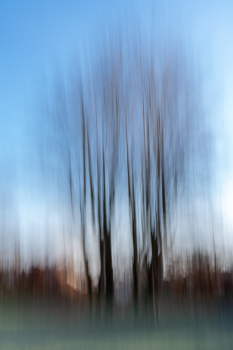 Trees | by Michel D·
