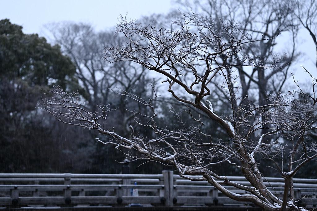Snowy Kyoto Gyoen National Garden 4