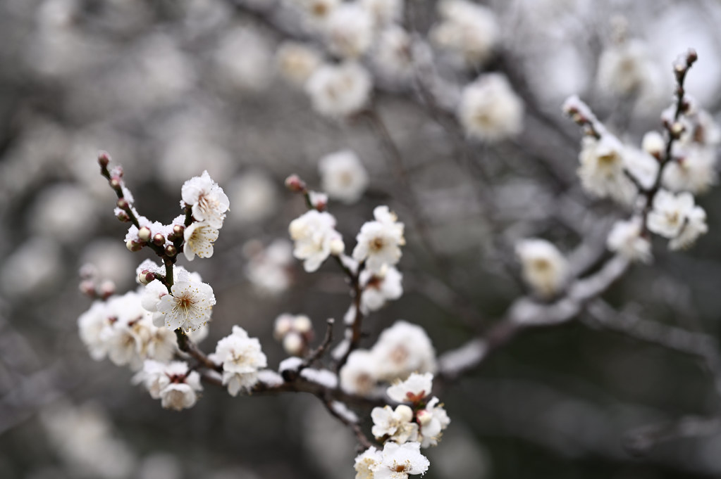 Snowy Kyoto Gyoen National Garden 3