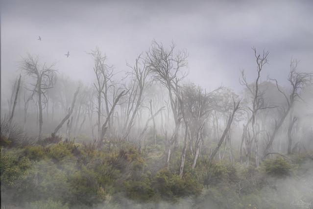 Haunted frightened trees 1 DSC_2202