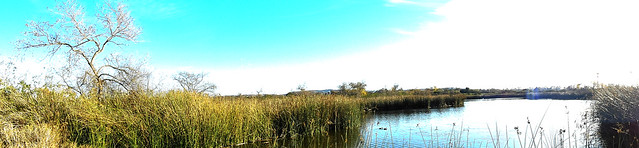 Winter Marsh Panorama