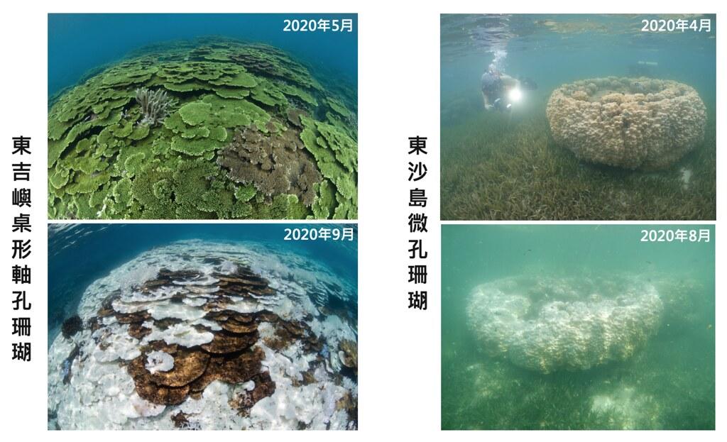 2020年東沙島、東吉嶼不同月份珊瑚白化程度比較。照片提供:蘇淮