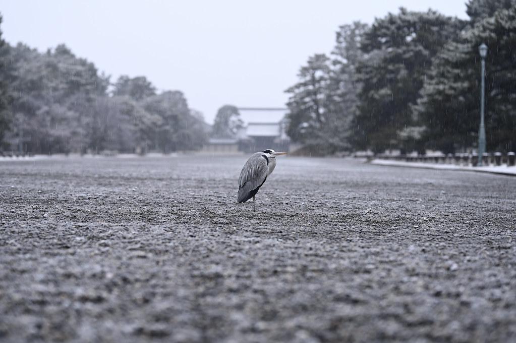 Snowy Kyoto Gyoen National Garden 1