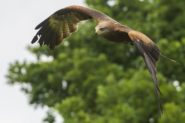 Birds of Prey, Warwick Castle