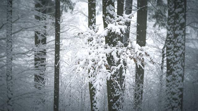 _DSC31049 Finally real winter!