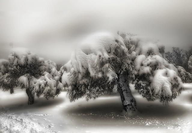 Winter storm.  Tormenta de invierno.