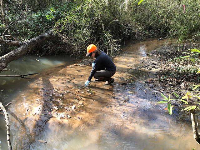 Auburn graduate student Elizabeth Bradley collects a water sample.
