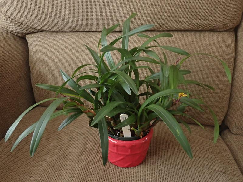 Les Orchidées chez Cloo en 2021 50827907848_81b5d74041_c
