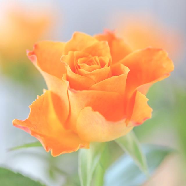 Tangerine Dreams