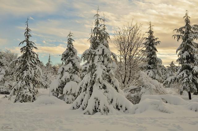 Bosque invernal (Explore 2021-01-14)