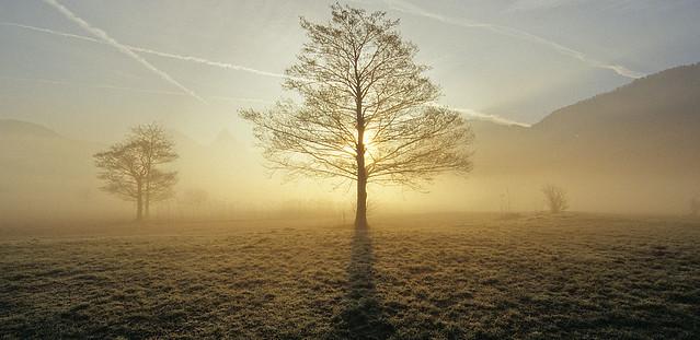tree, of many, one
