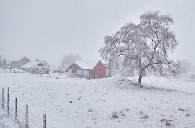 Snowfall,  Norway