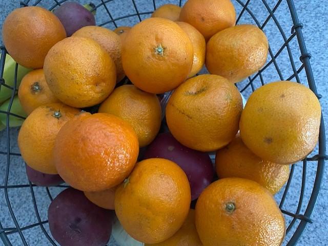 oranges picture