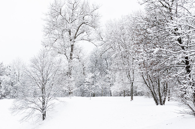 A family of trees playing in the snow