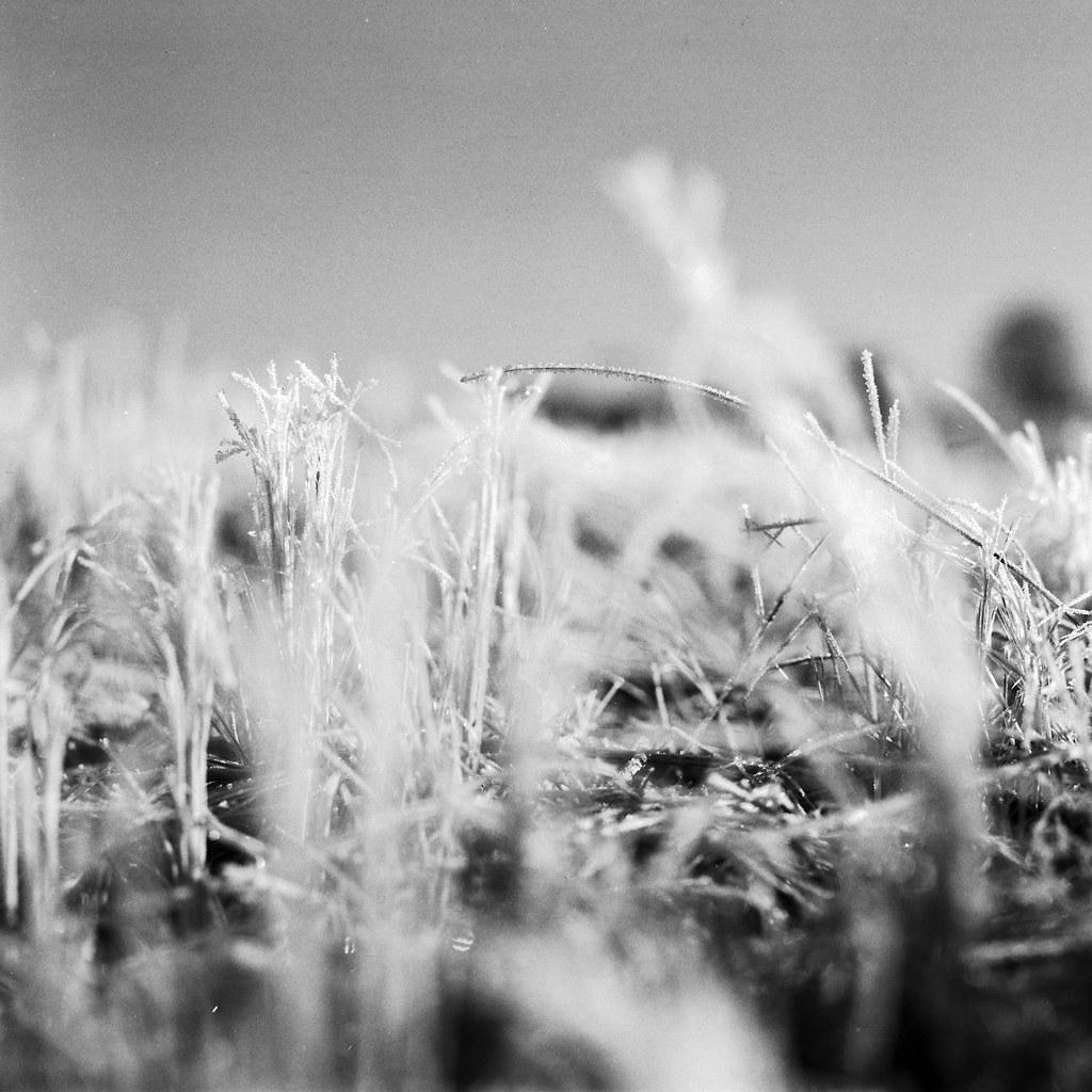 Winter on grass