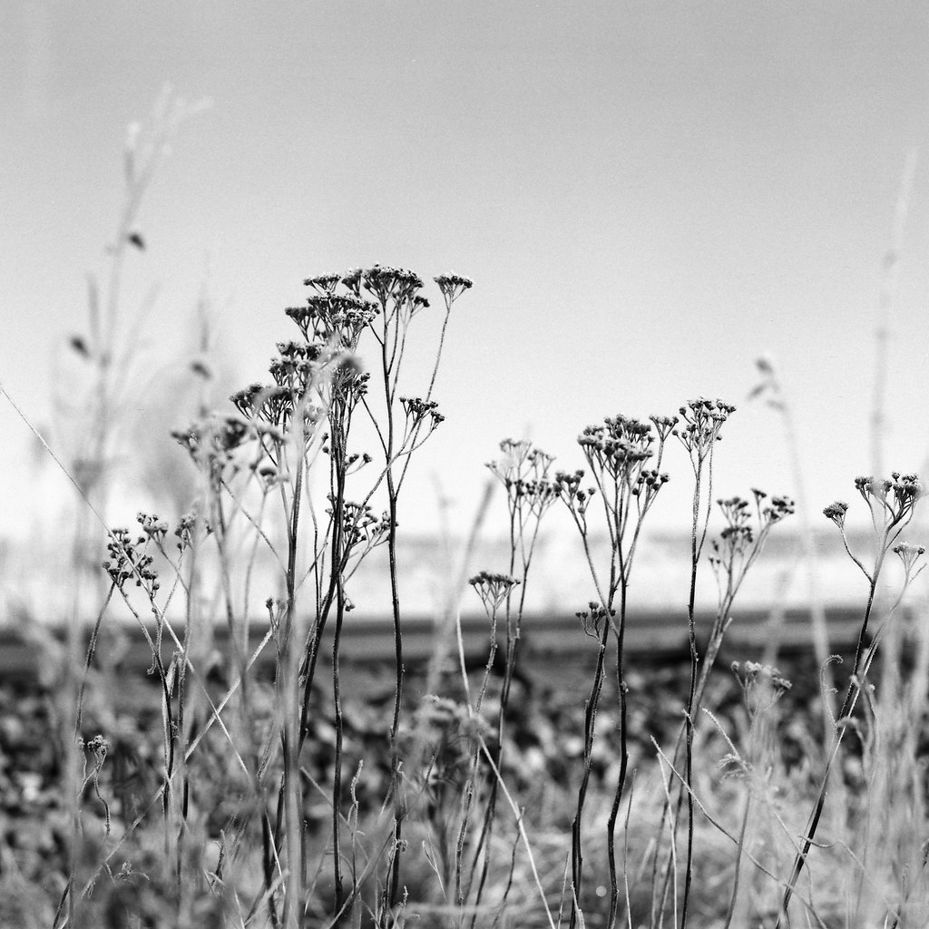 Winter on grass II