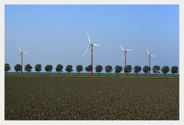 Wind Turbines and Trees