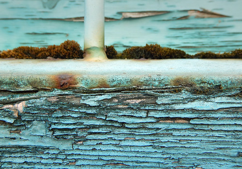 Macro of weathered blue wood in Vancouver, Canada