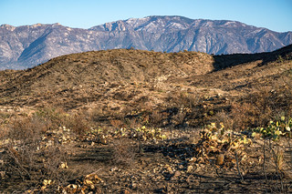 2020 11 Burned area around Crow Wash in the Tortolita Mountains | by c.miles