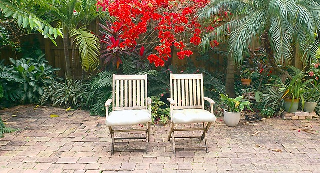 Chairs Before Blooming Bouganvillea
