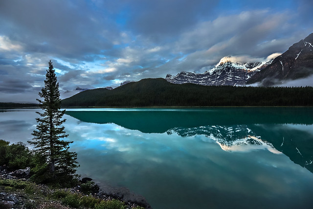 Water fowl  lake
