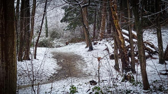 Waldspaziergang Im Schnee II