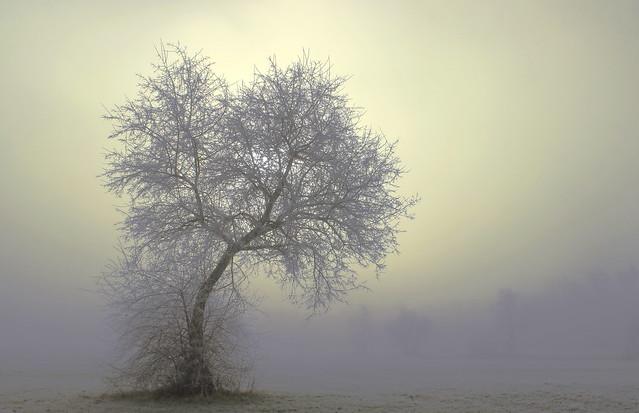 A misty day / EXPLORE / Egy ködös nap