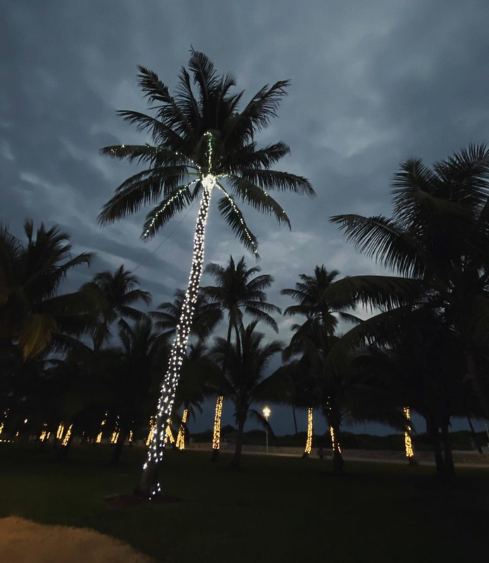 The Nightlife #palmtrees #twinklelights #southbeachmiami #bluehour
